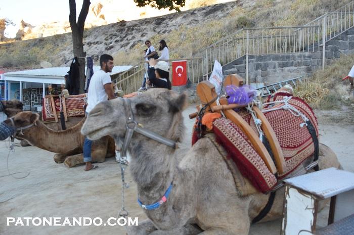 consejos para viajar a Turquía - Patoneando (23)