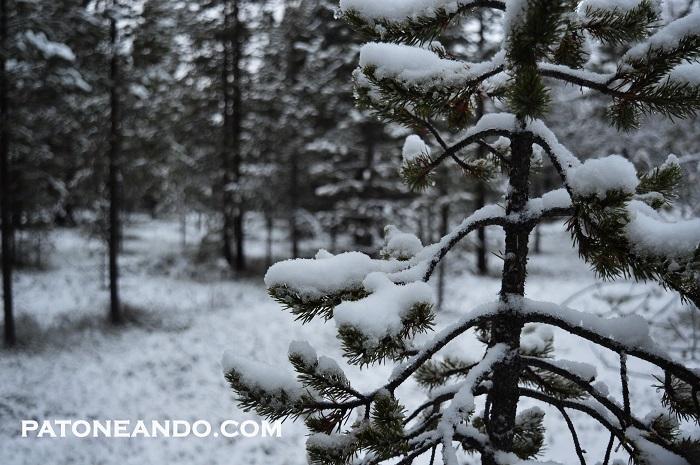 pueblo encantado en Laponia-Patoneando (8)