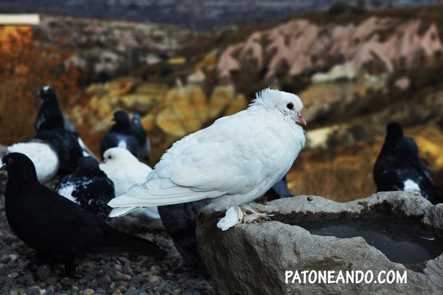 vida itinerante -Patoneando blog de viajes (1)