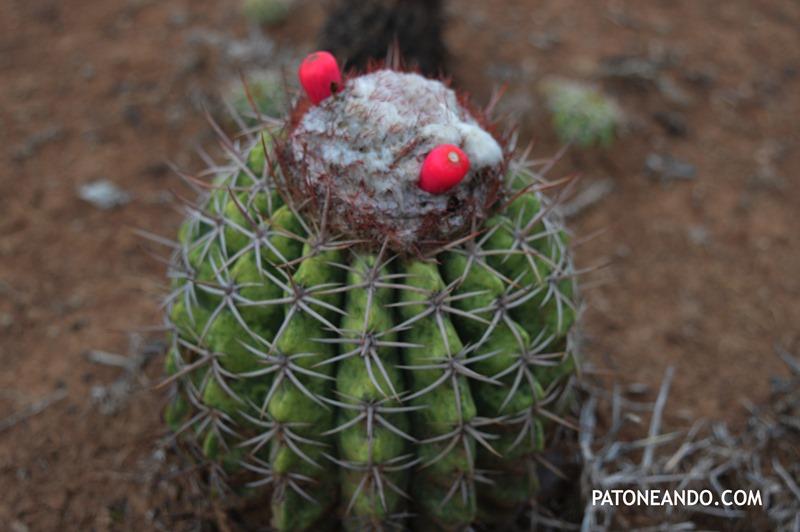 Tatacoa un desierto que no es desierto -Patoneando blog de viajes (17)