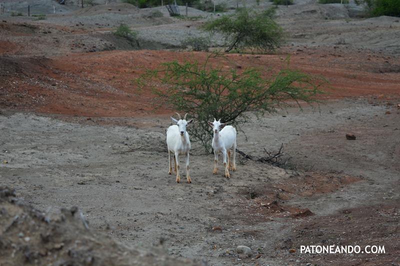 la tatacoa un desierto que no es desierto -Patoneando blog de viajes (18)