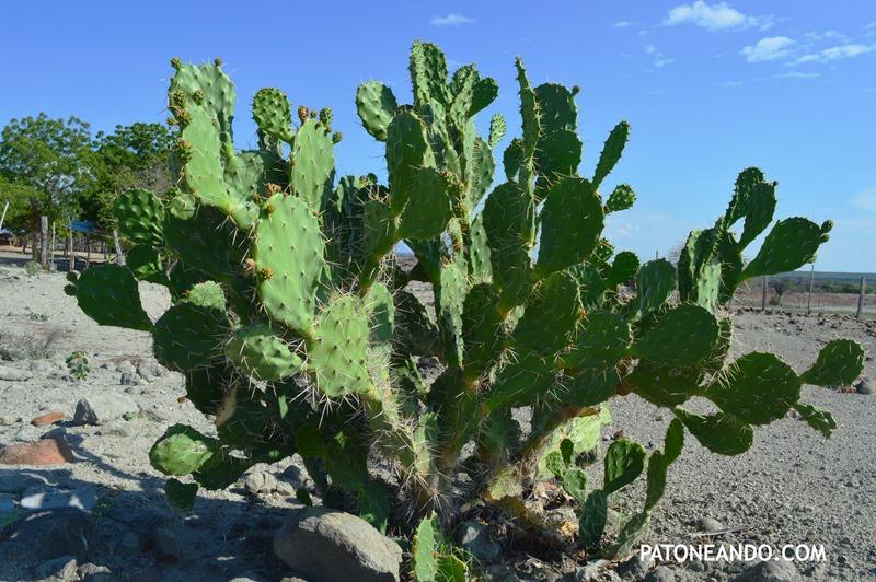 la tatacoa un desierto que no es desierto -Patoneando blog de viajes (4)