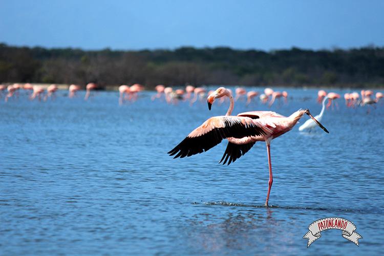 flamencos rosados en Camarones, Guajira - Patoneando blog de viajes (1)
