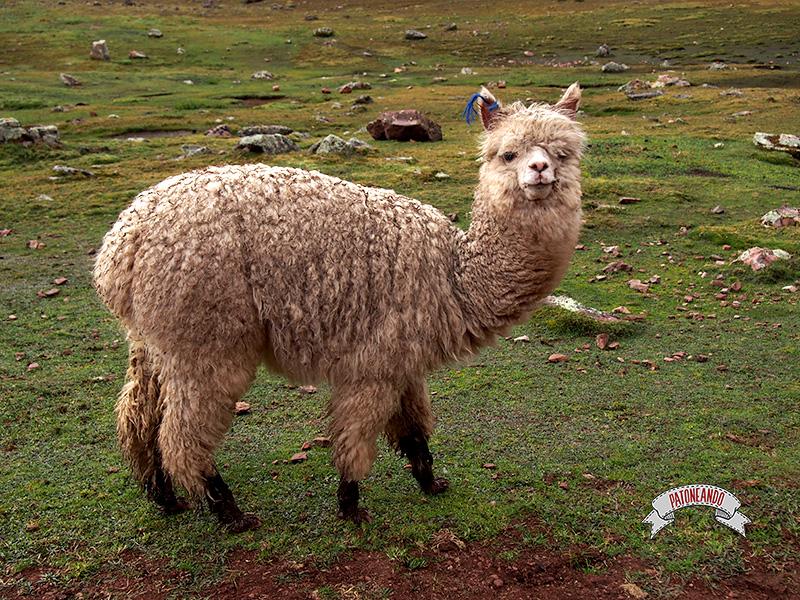 Montaña Siete Colores, Perú - Patoneando blog de viajes.